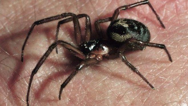Nagy-Britannia legmérgesebb pókja nagyon elszaporodott Londonban és környékén: több iskolát be is zártak 2