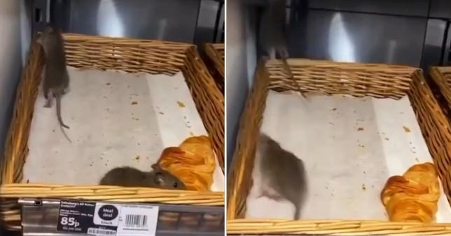 egerek Sainsbury's szupermarket
