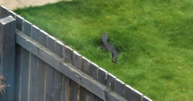 krokodil yorkshire