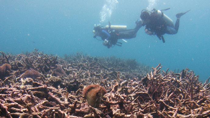 ancient-underwater-forest-norfolk.si