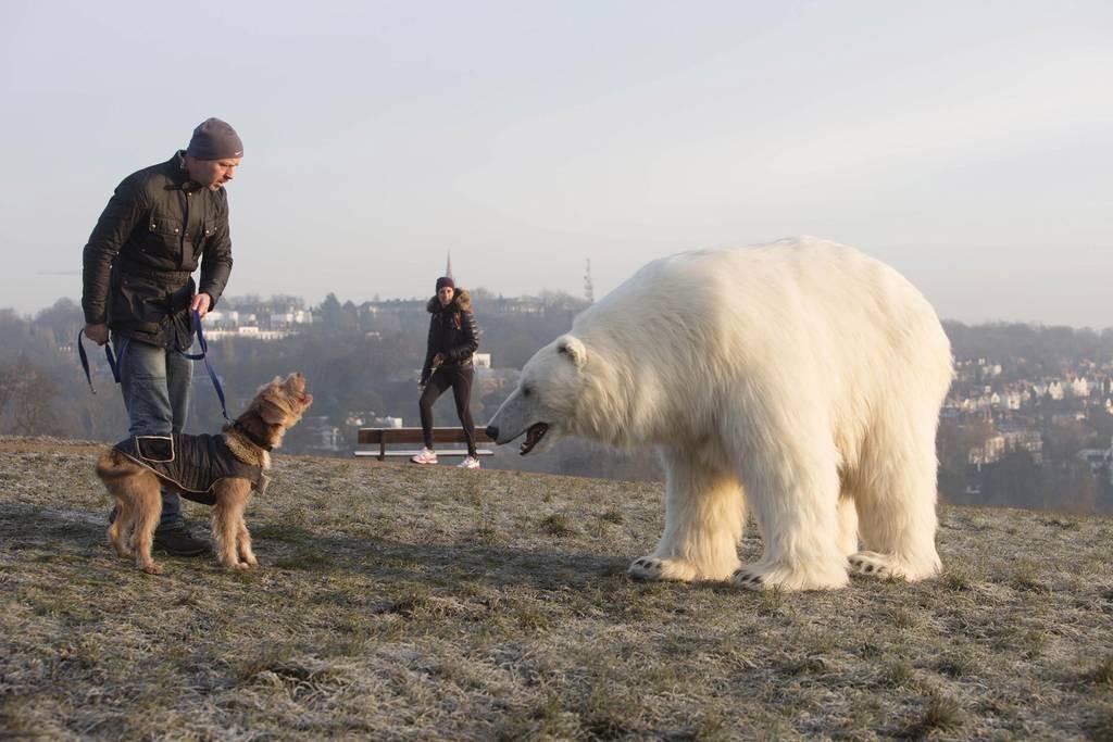 polarbear2701b