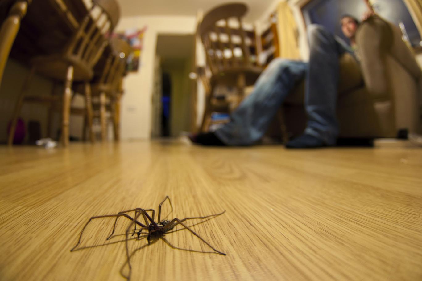 Hogyan szabaduljunk meg a rengeteg póktól otthonunkban Angliában 1