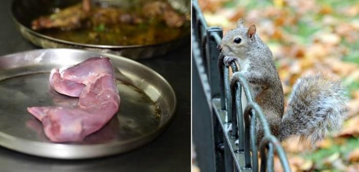squirrel2010a