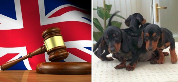 £5000-ra büntettek egy magyar férfit Angliában, mert illegálisan hozott be kiskutyákat az országba 2